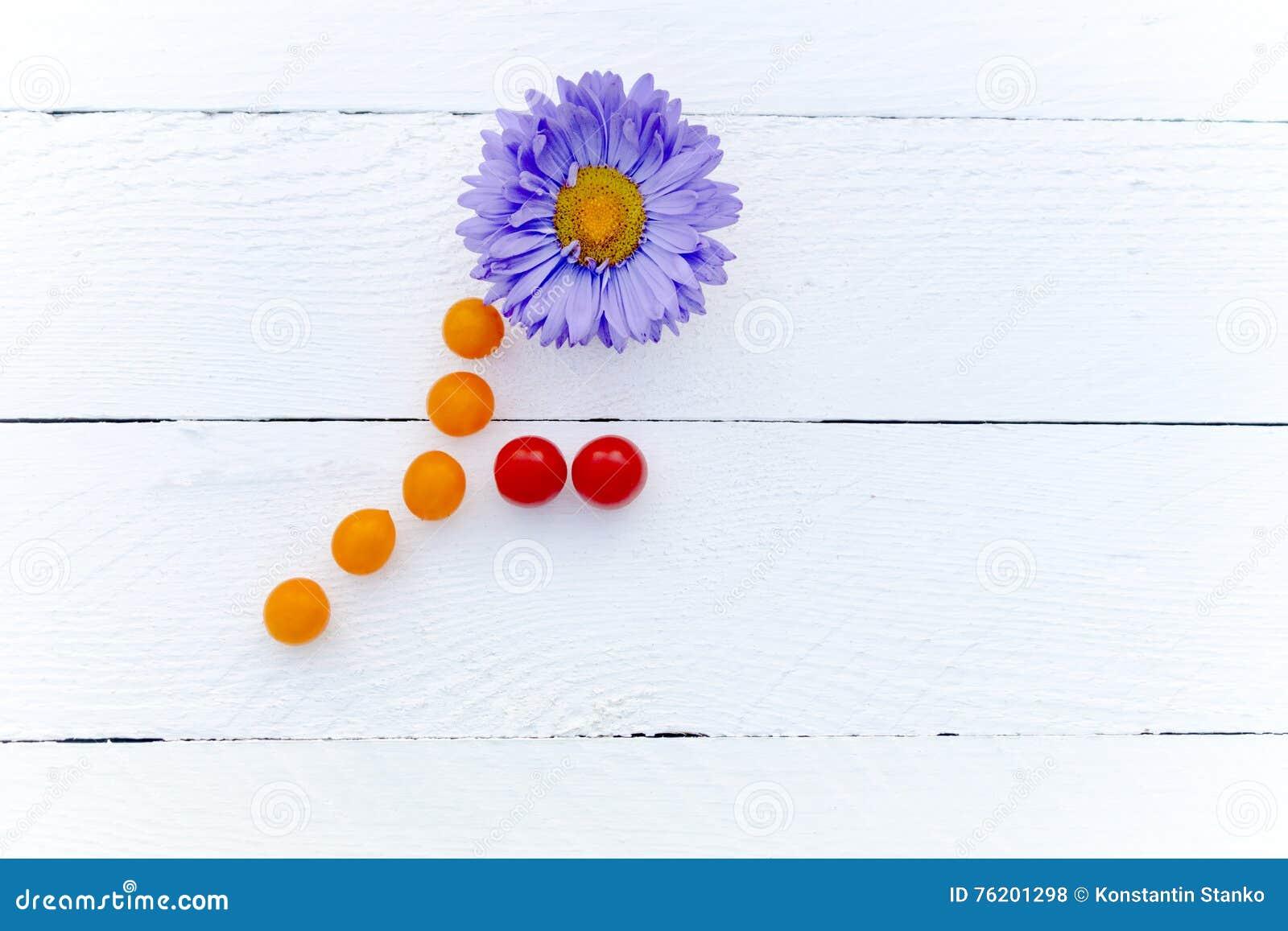 Tronco de Violet Chrysanthemum y hojas de los tomates de cereza