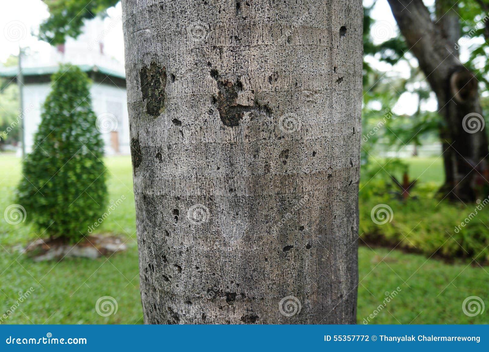 Tronco di albero con fondo vago
