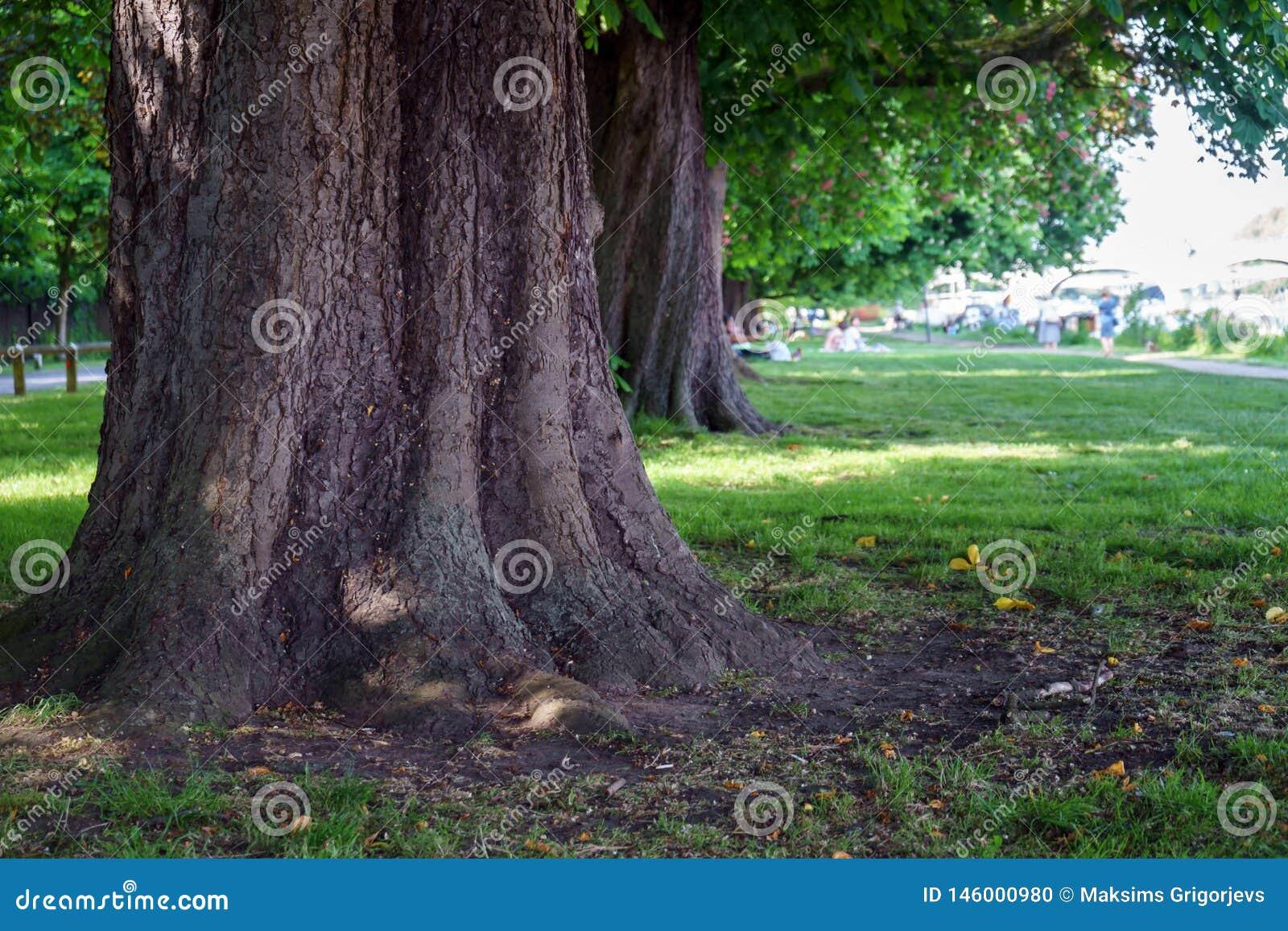 Tronco di castagno nel parco del giardino di estate