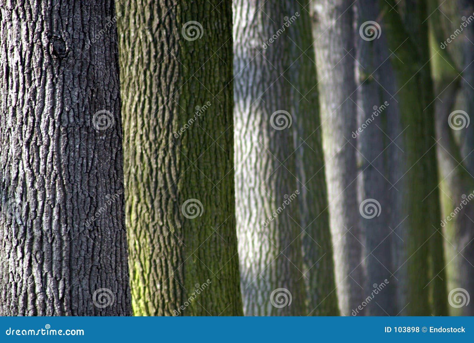 Troncos coloridos das árvores