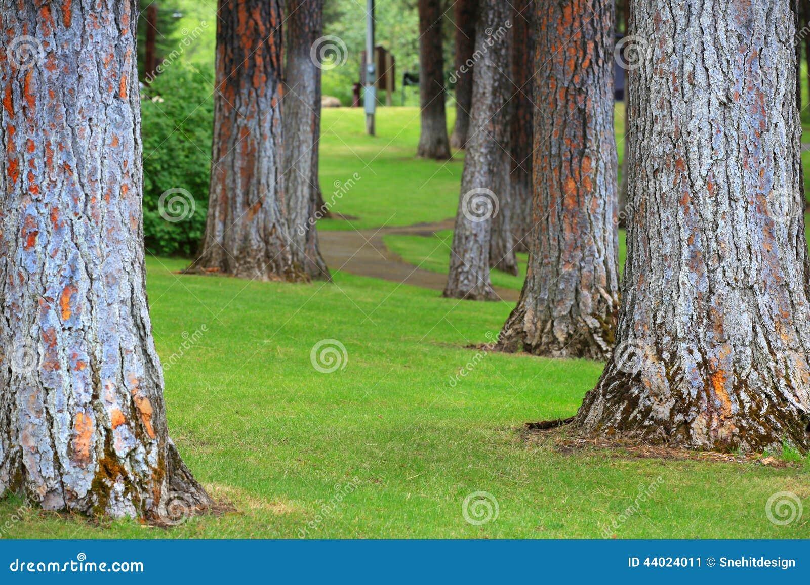 Troncos de árboles altos