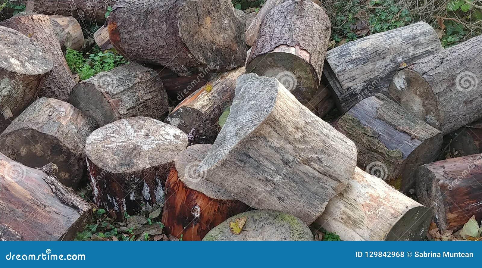 Troncos de árvore nas madeiras