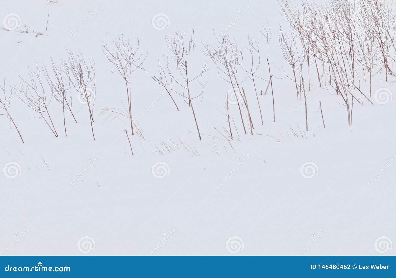 Troncos desnudos en una pradera Nevado