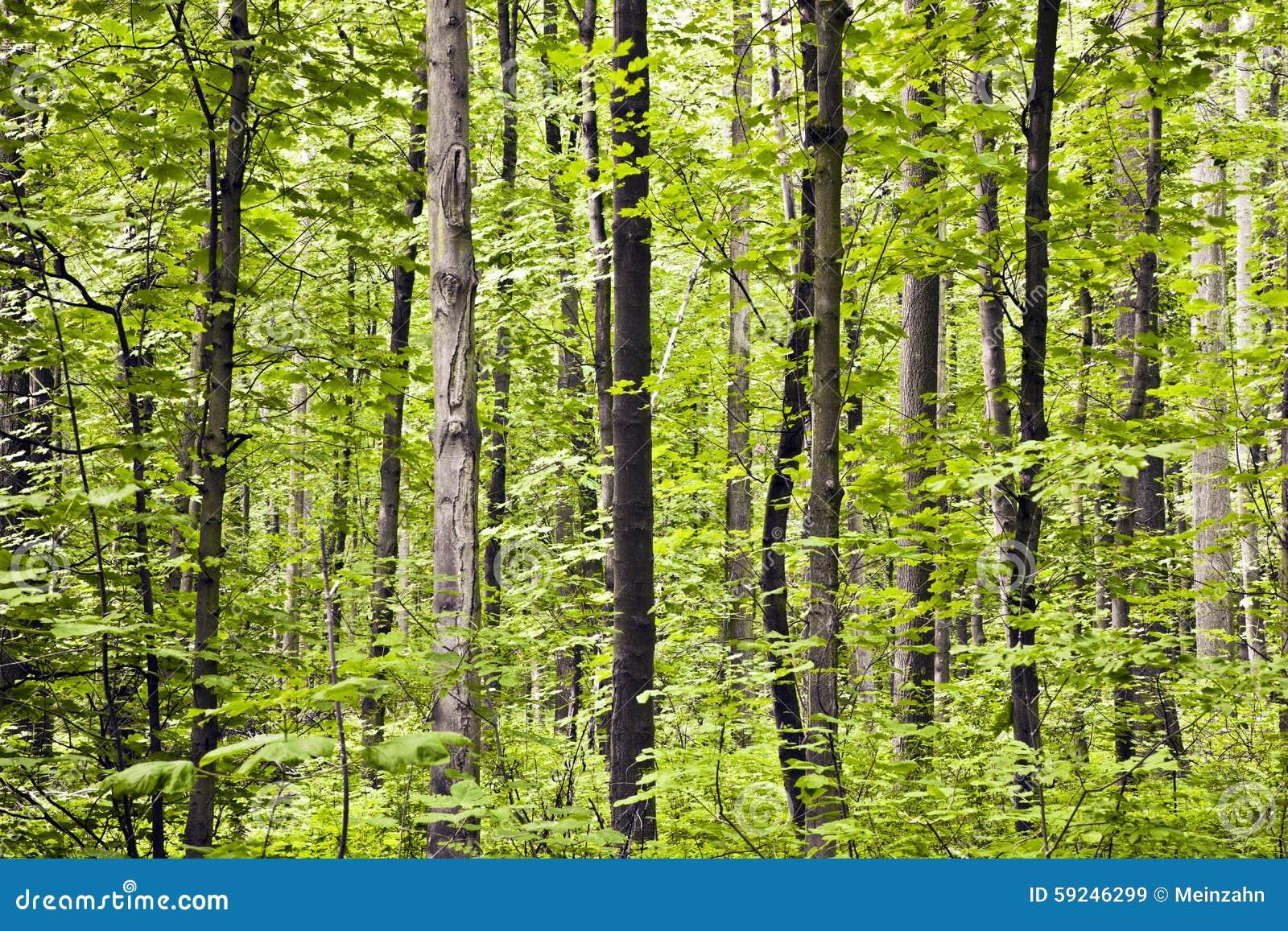 Troncos en bosque