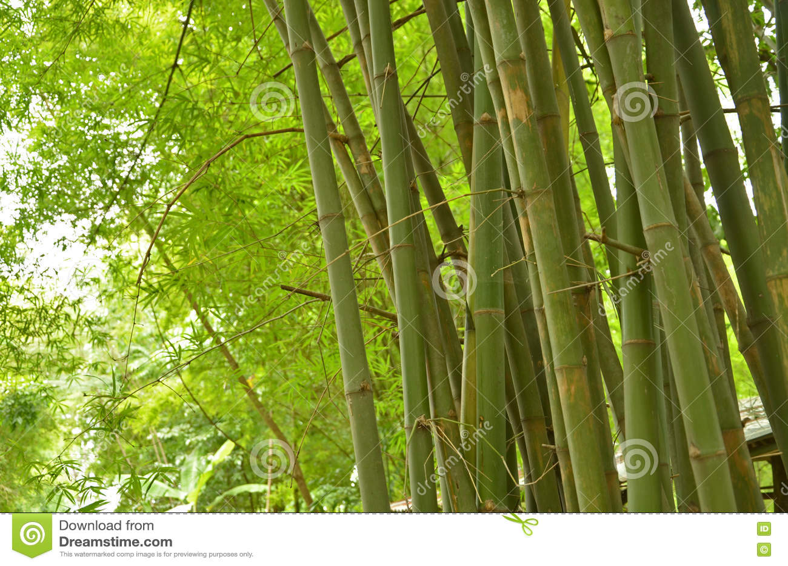 Troncos y hojas verdes del grupo de bambú