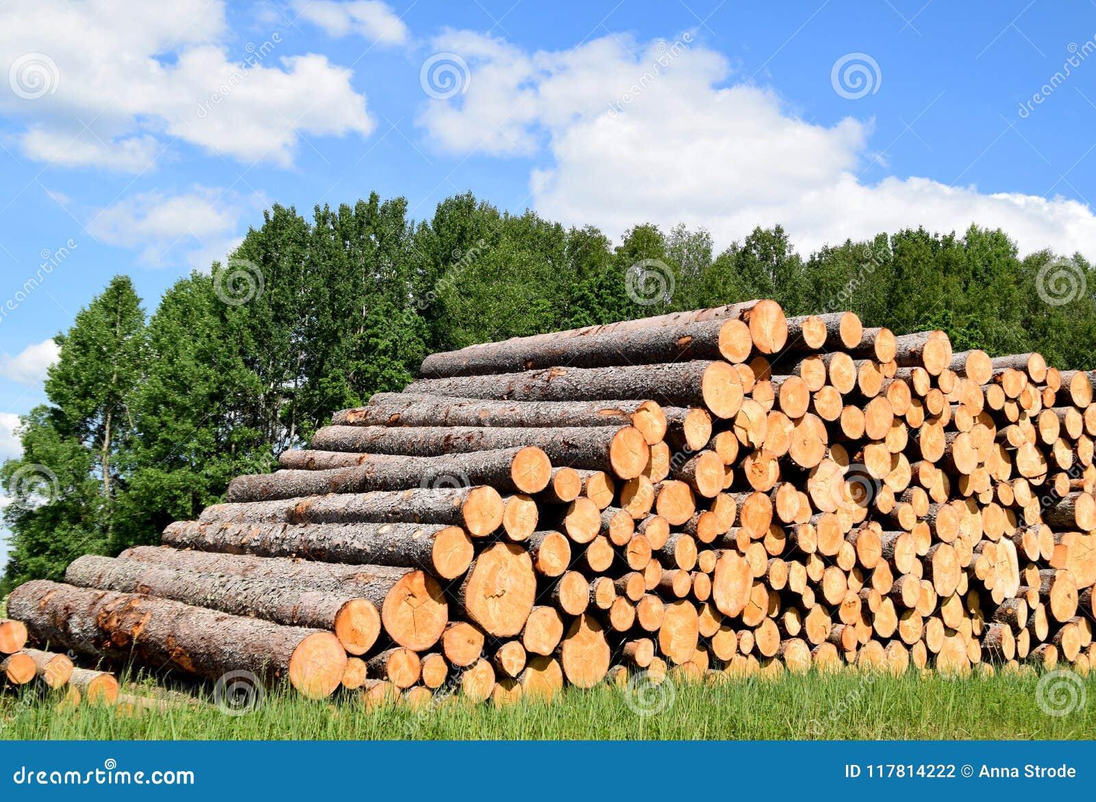 Troncs d arbre abattus par l industrie de notation de bois de construction
