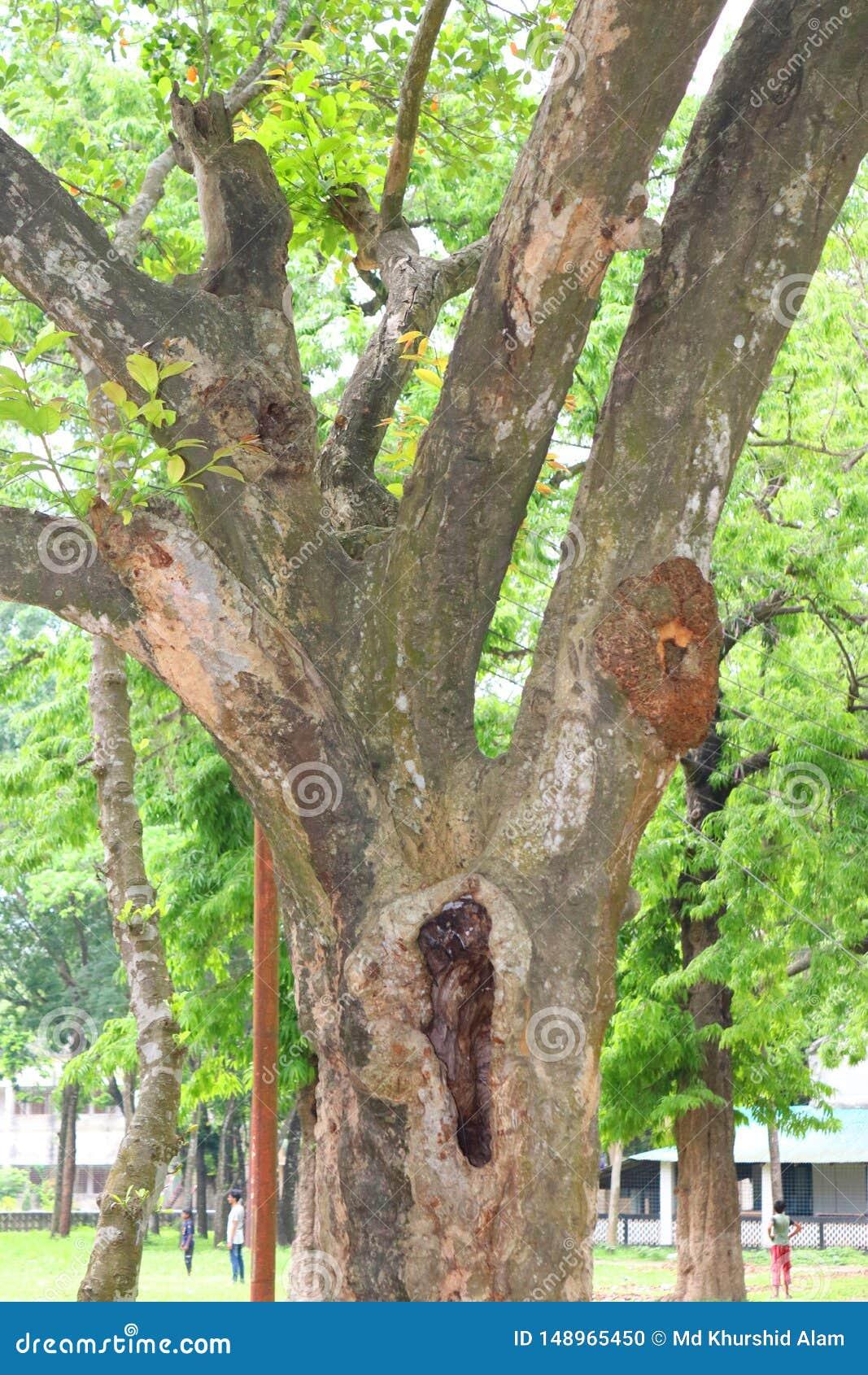 Troncs d arbre ?normes en cavit? grands racines et rayon de soleil d arbre dans les racines forestSpring vertes d un pr? d un gra
