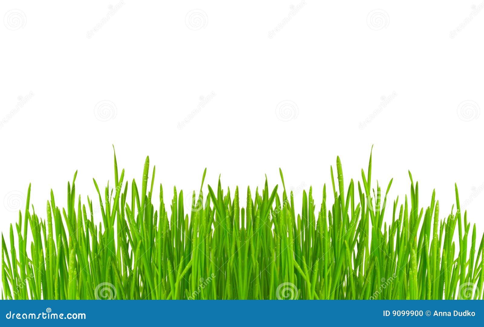 Tropfen auf Gras