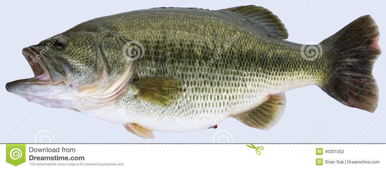 Trophy Largemouth Bass