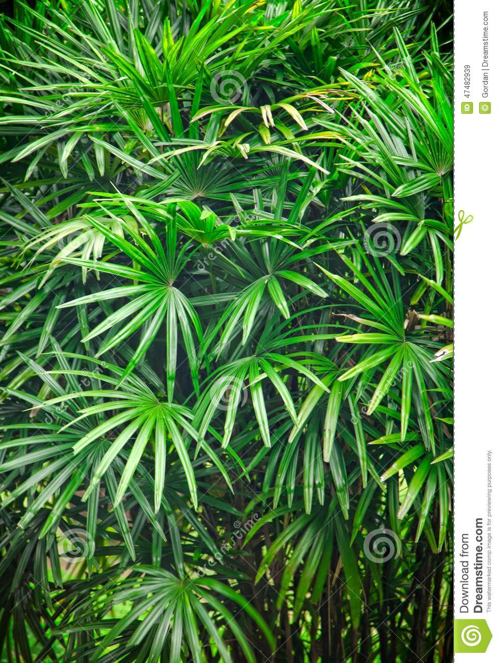 Tropical Asian Rain Forest Leaves Background Stock Photo Image