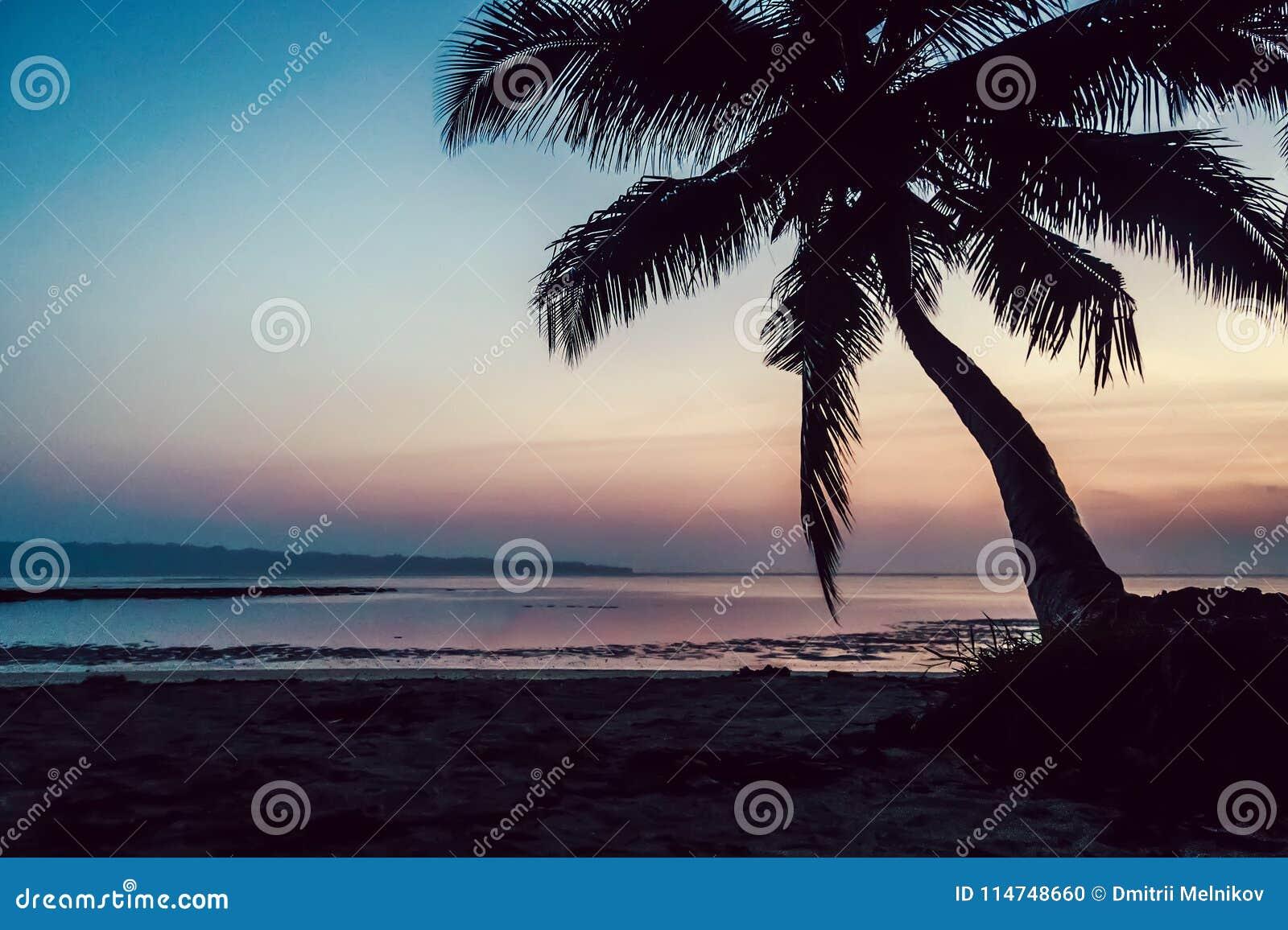 Tropical Beach Background At Sunset Sunrise Stock Photo
