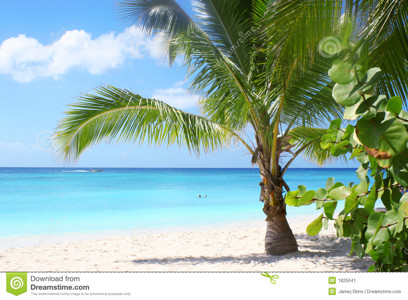 vacations summer palm - photo #15