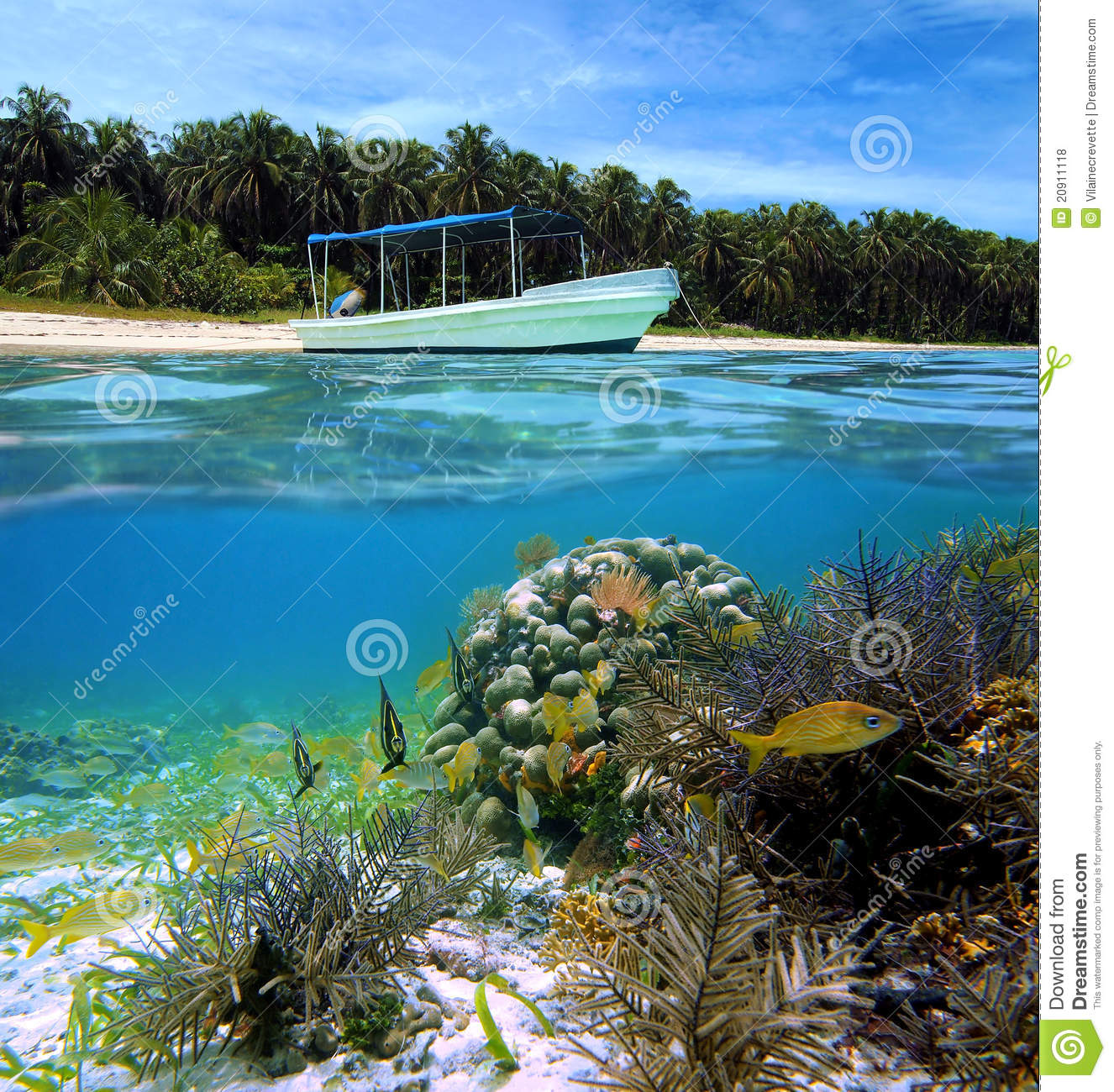 Exotic Beach: Tropical Beach And Fish Stock Photo. Image Of America