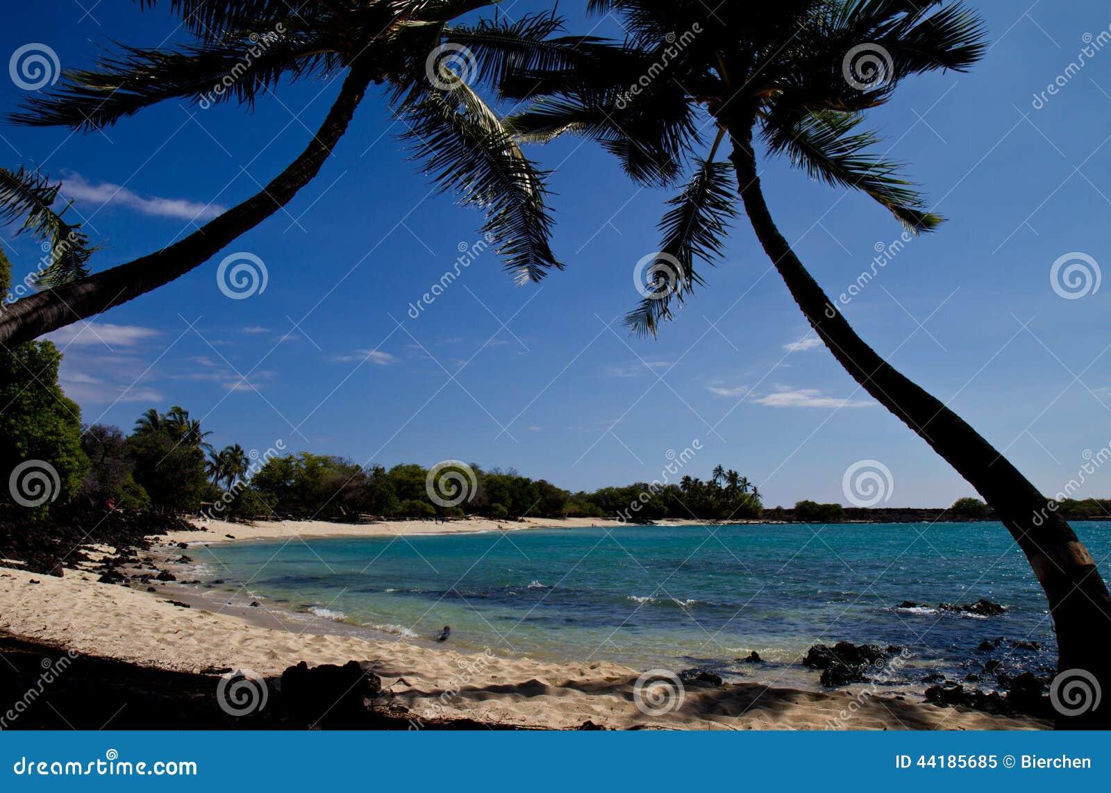 Tropical Beach (Hawaii/USA) Stock Photo