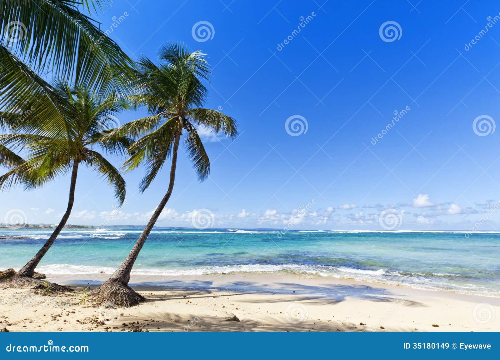 Guadalupe Island Beaches