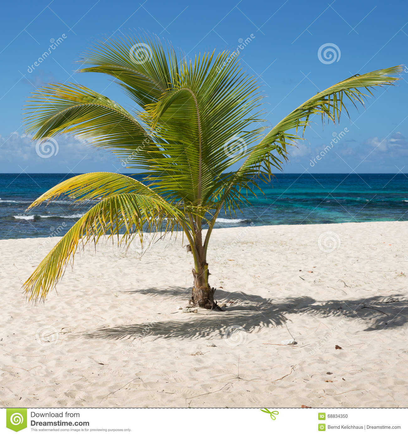 Guadeloupe Beach: Tropical Beach With Palm Tree In Guadeloupe Stock Photo