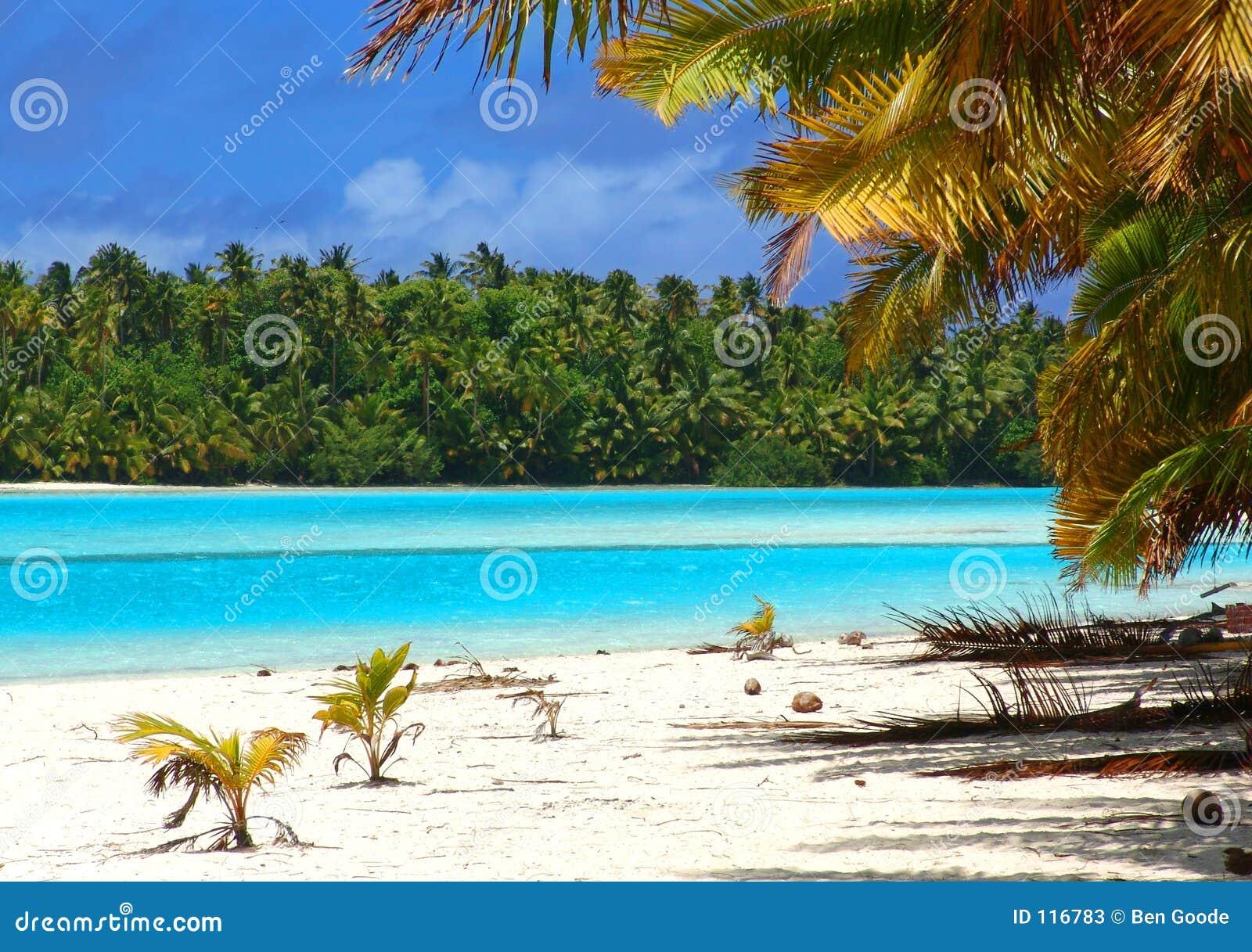 Tropical Beach Scene