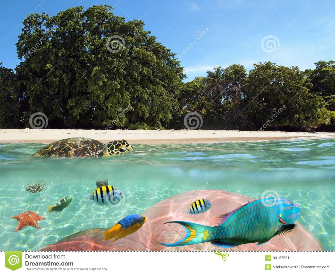 Tropical beach with underwater view and a turtle stock for How to fish from the beach