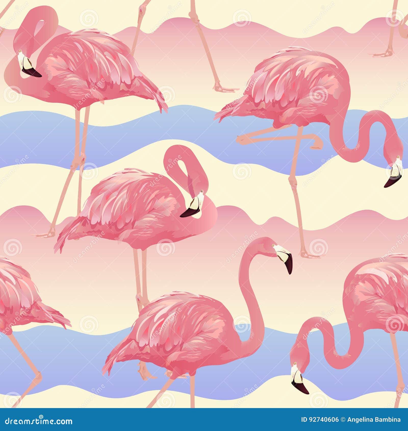 Tropical Bird Flamingo Background