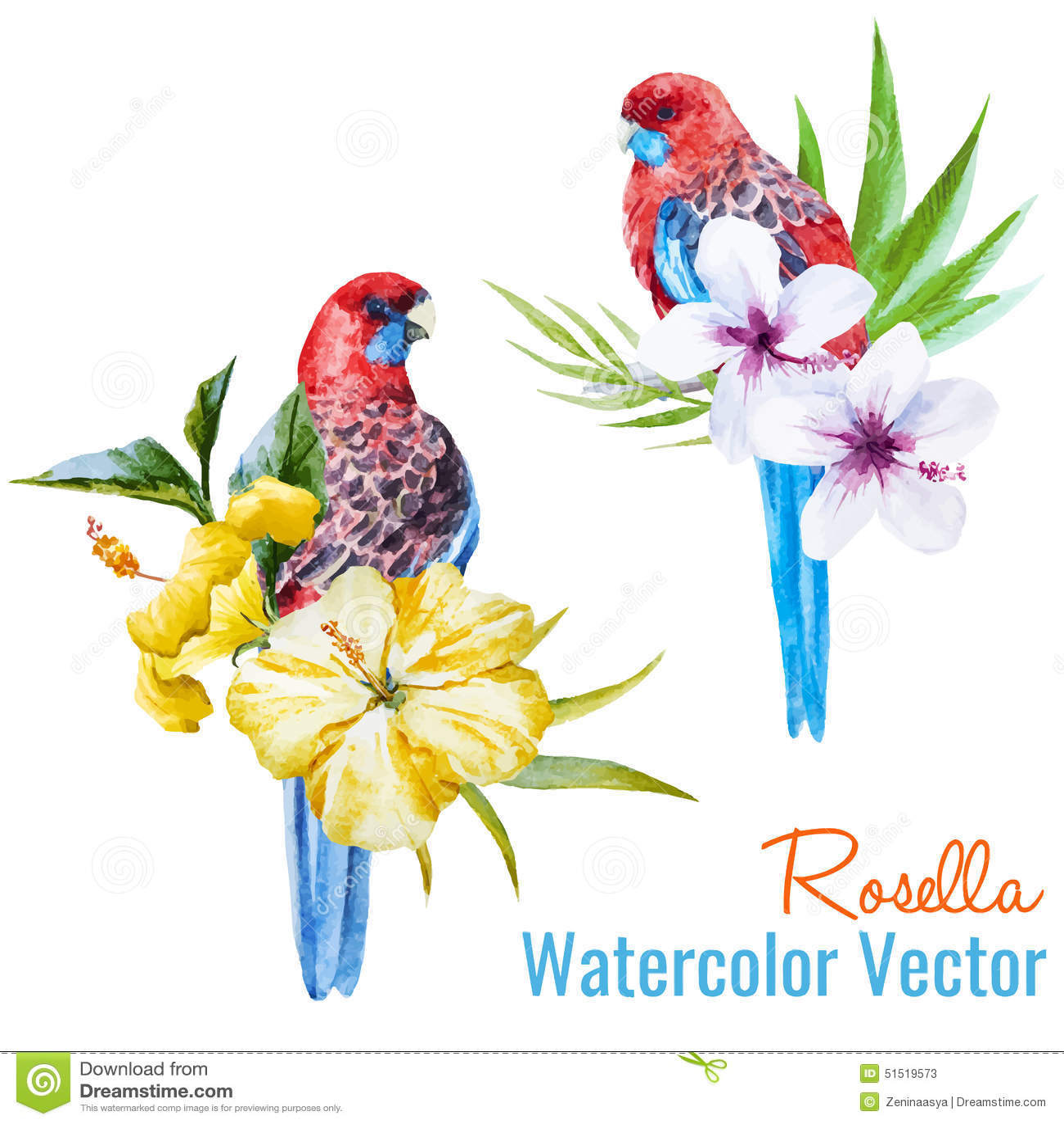 Tropical Birds Stock V...