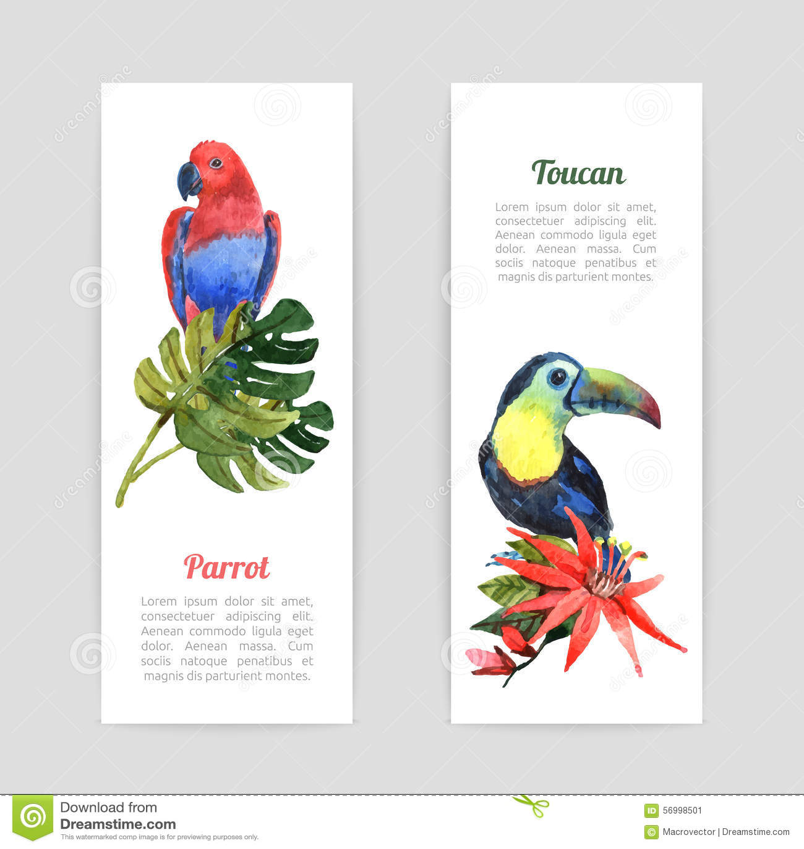 how to set up parrot healer
