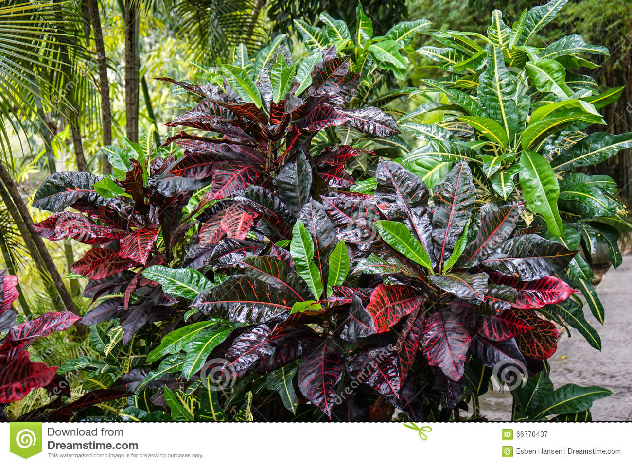Royalty Free Stock Photo. Download Tropical Bush In The Garden ...