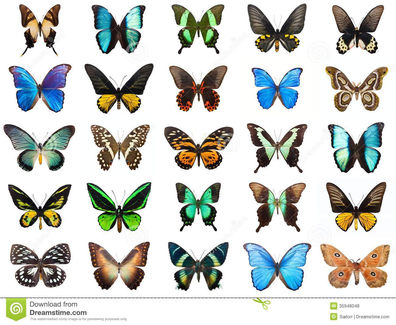 Collection of beautiful tropical butterflies isolated on white ...