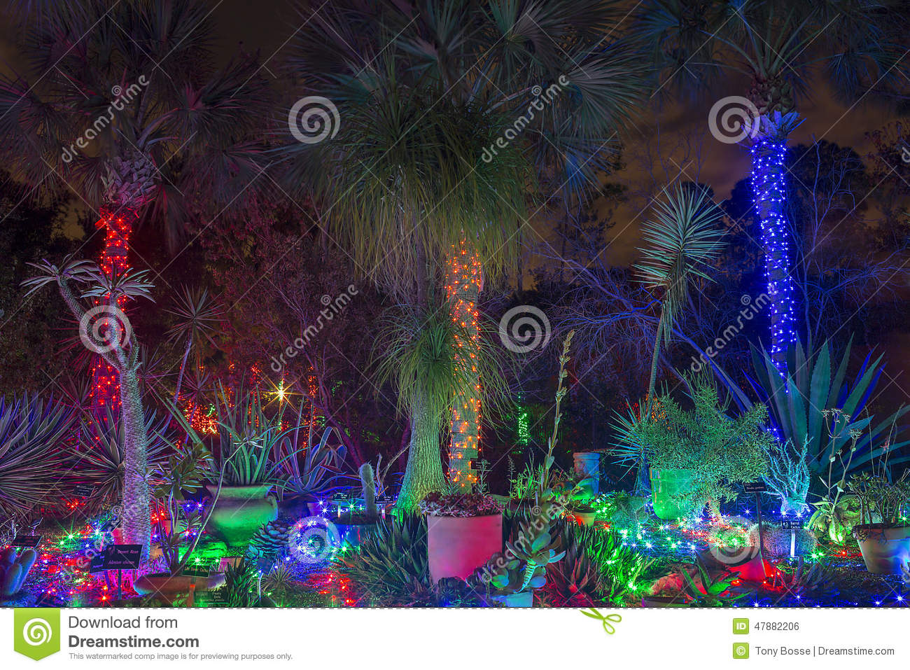 download tropical christmas garden stock photo image of trees 47882206