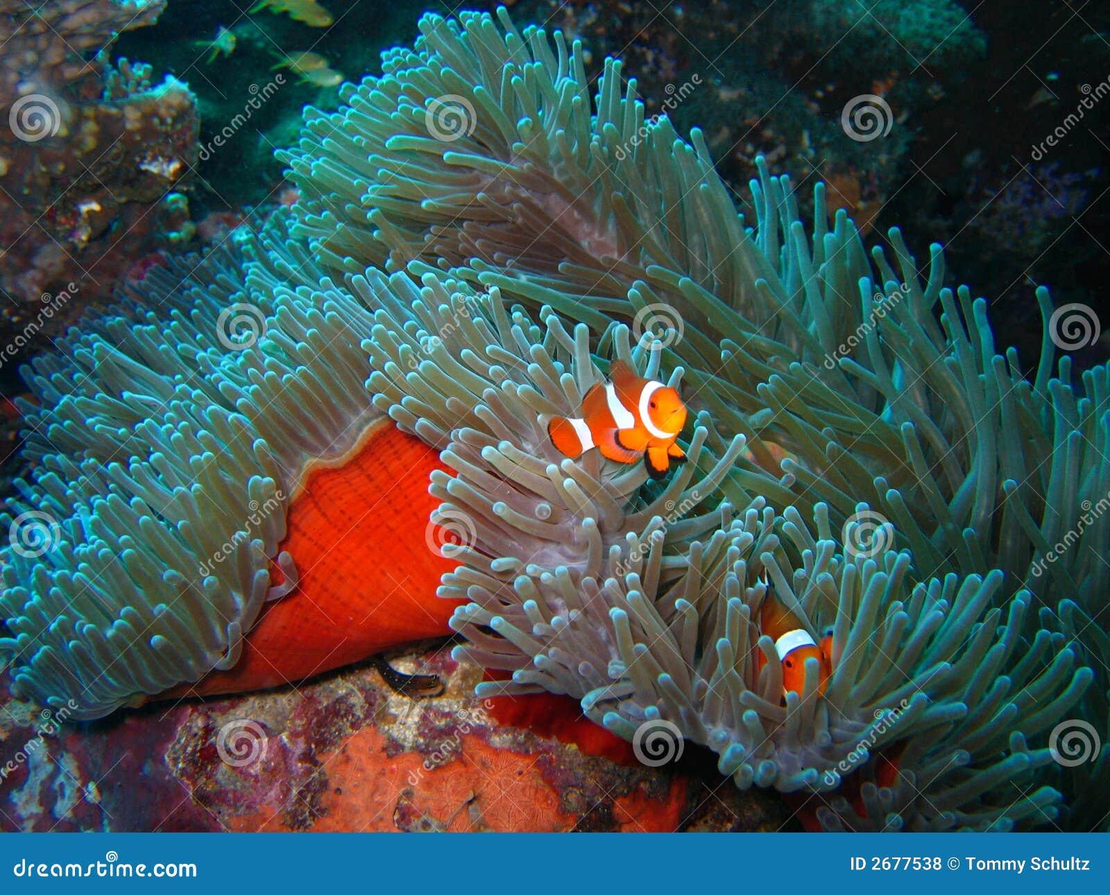 Clownfish - скачать на русском для скайпа (клоунфиш) для изменения 2