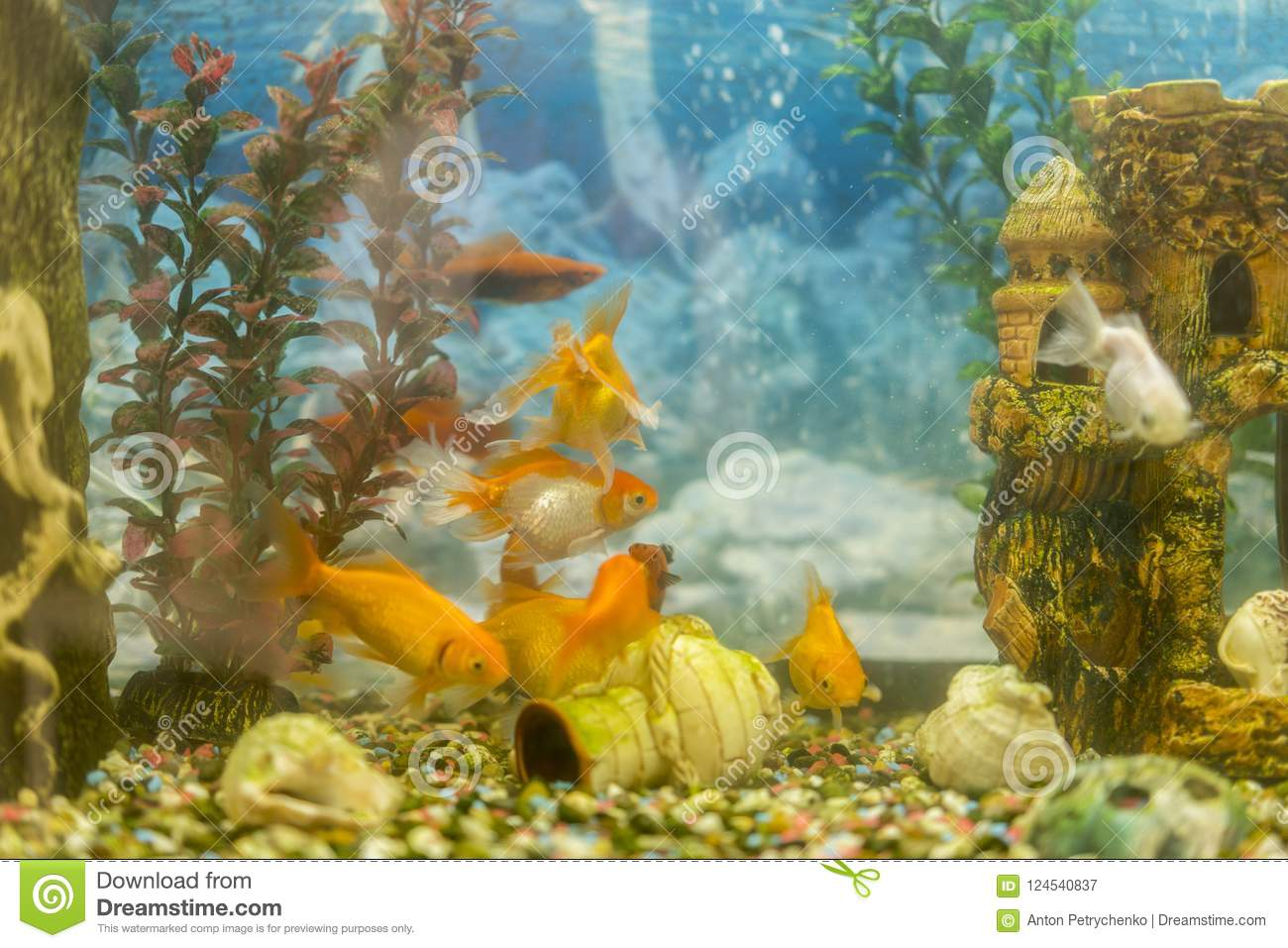 tropical colorful fishes swimming in aquarium with plants fish in