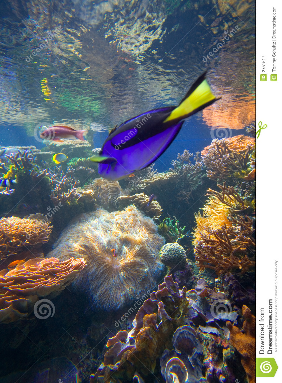 Tropical coral reef fish royalty free stock photography for Reef tropical fish