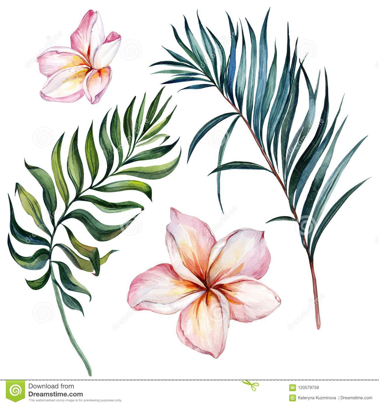 Tropical exotic floral set. Beautiful pink plumeria flowers and green palm leaves isolated on white background.
