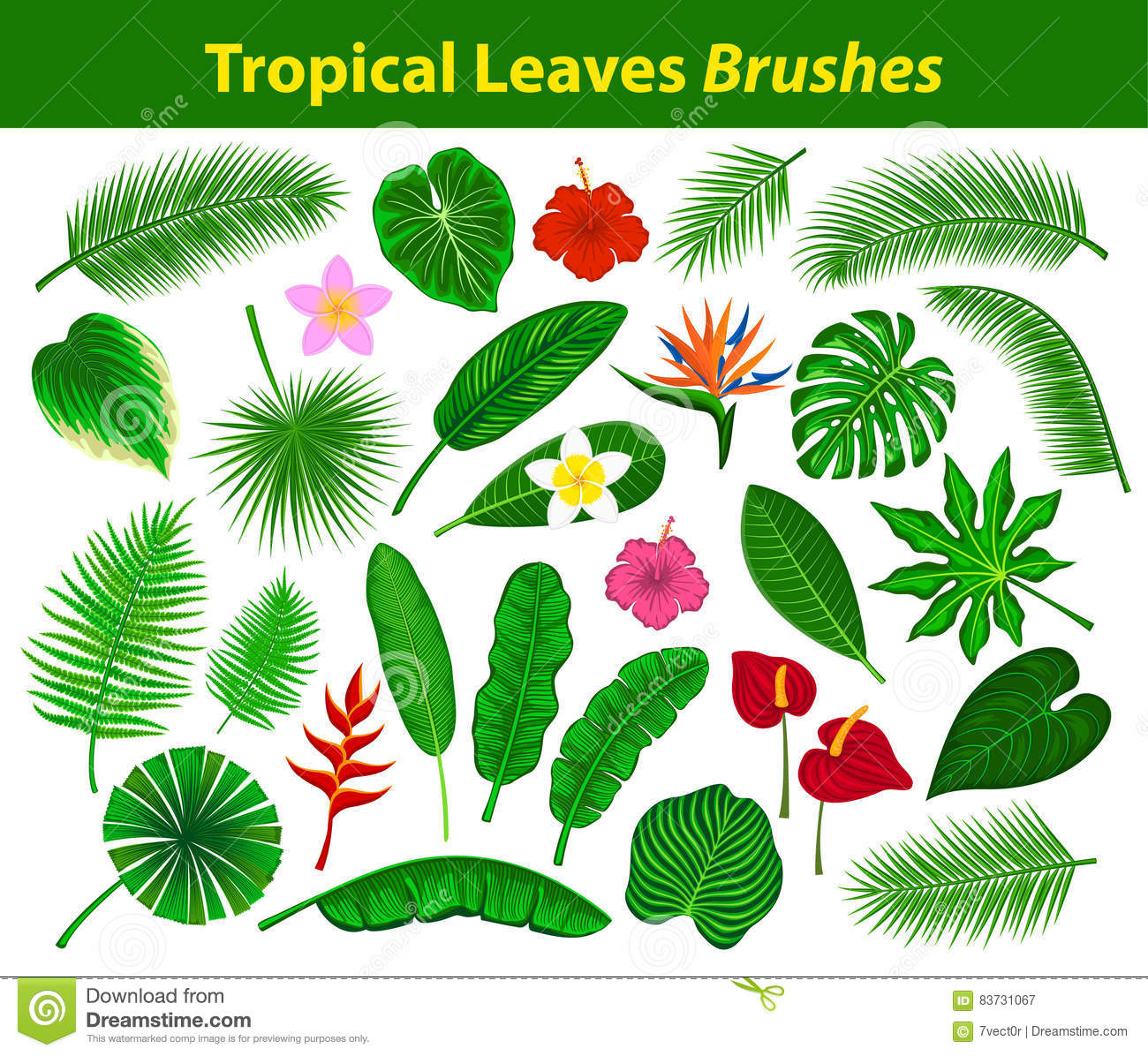 Tropical Exotic Leaves Collection As Brushes With Flowers Stock Vector Illustration Of Fern Collection 83731067 About 1% of these are aquatic plants. dreamstime com