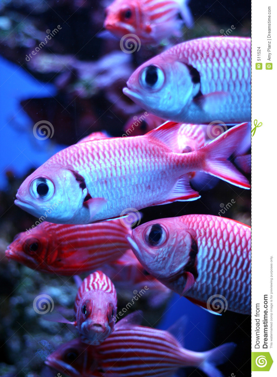 Tropical fish stock photo image of neon dark bright for 405 tropical fish
