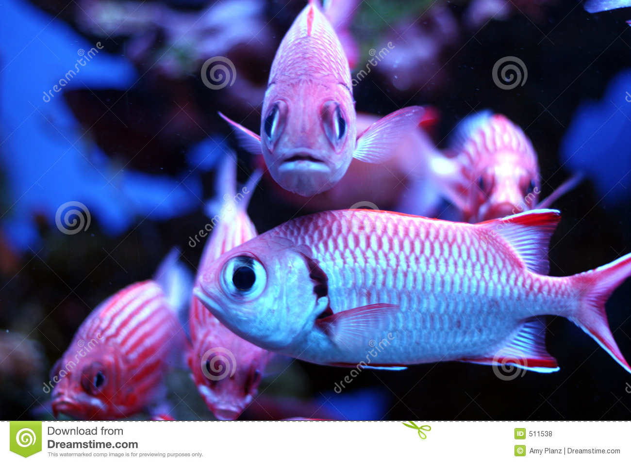 Tropical Fish Stock Photo Image Of Hawaii Scales