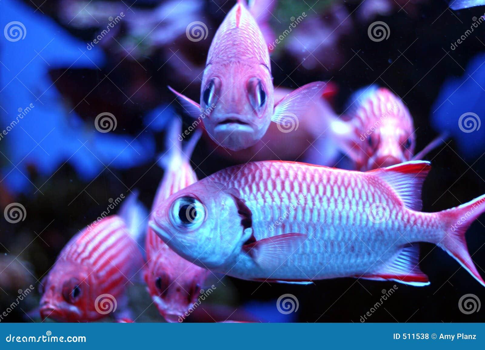 Tropical fish stock photo image of hawaii scales for Tropic fish hawaii