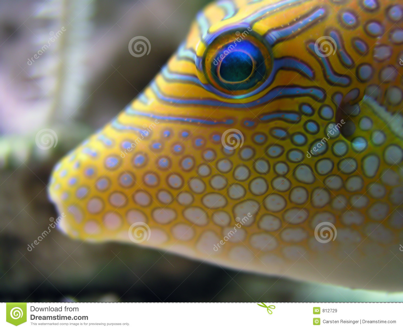 Tropical fish royalty free stock images image 812729 for Image of fish