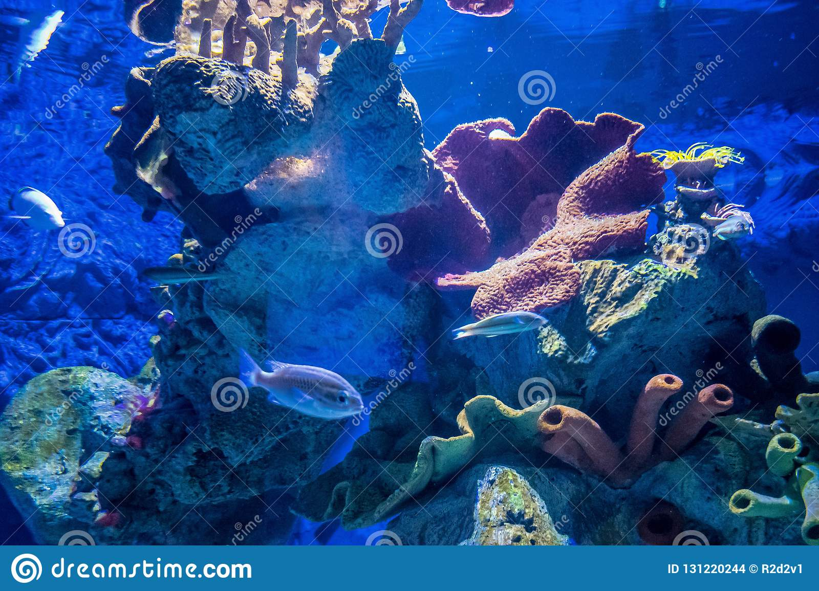 Tropical fish in an aquarium with coral