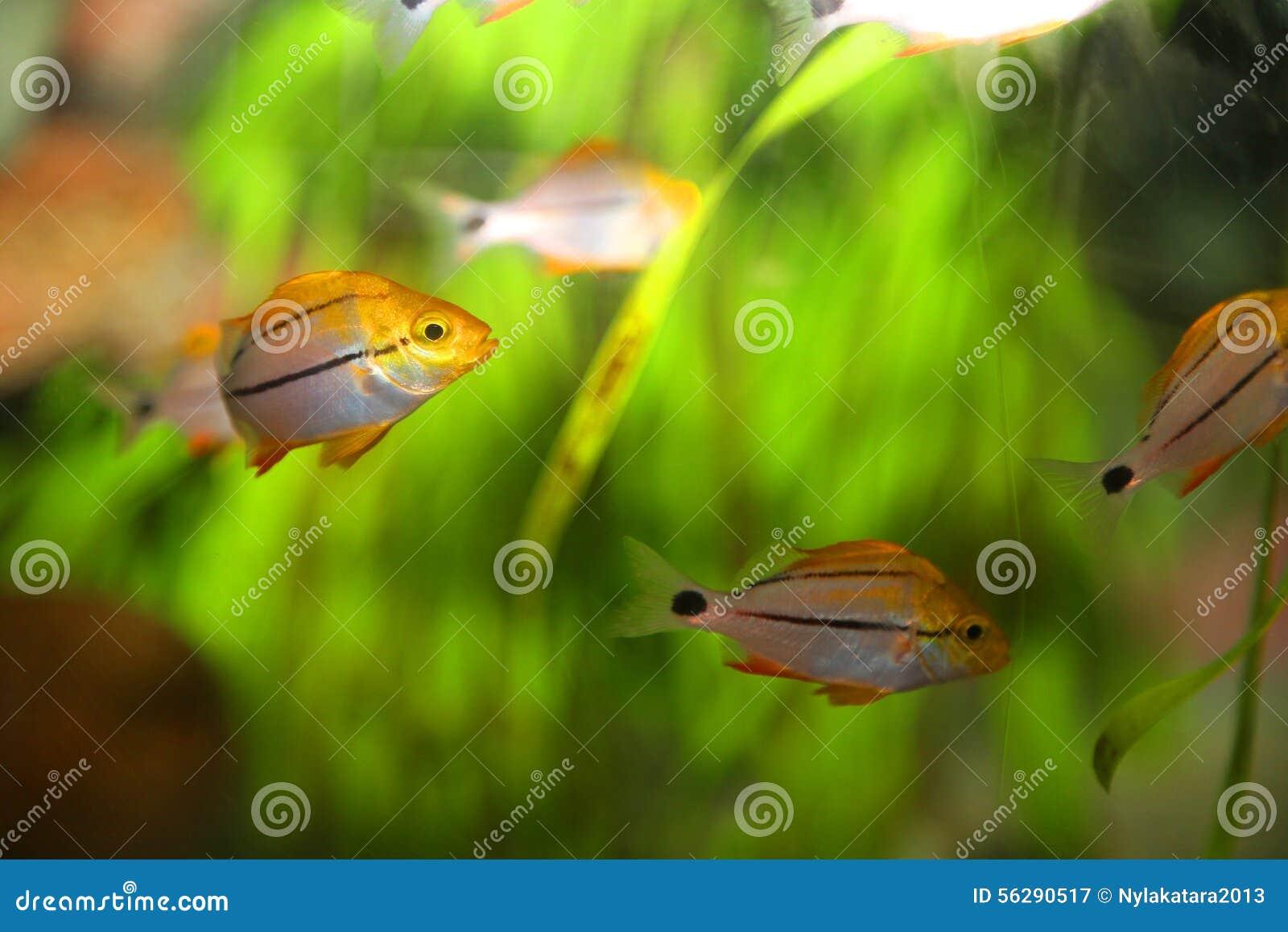 Tropical Fish Stock Photo Image 56290517