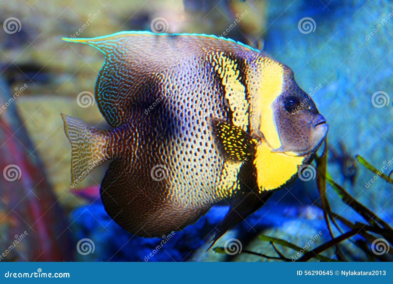 Tropical Fish Stock Photo Image 56290645