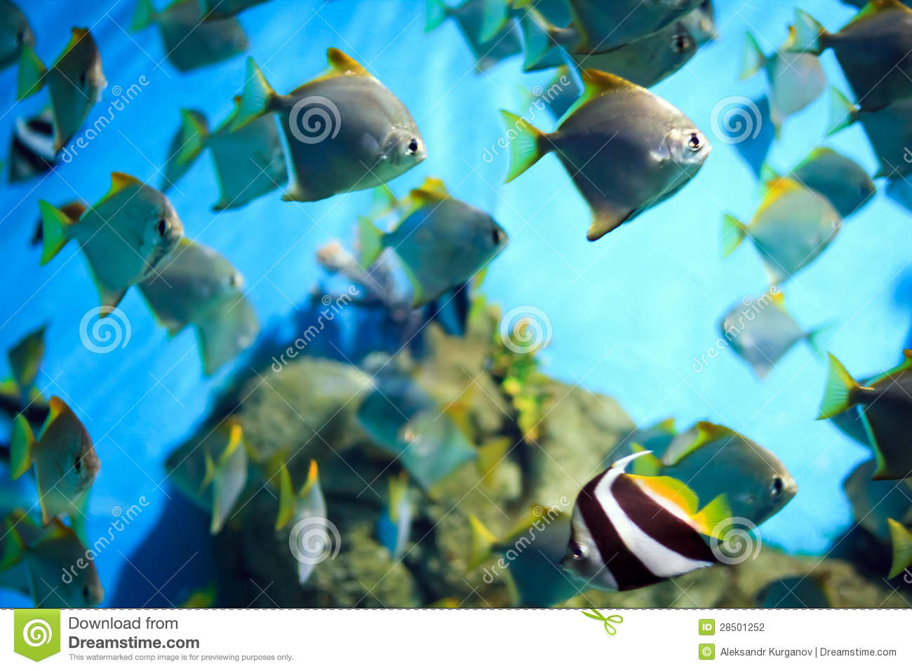 Tropical fish on a coral reef stock photography image for 405 tropical fish