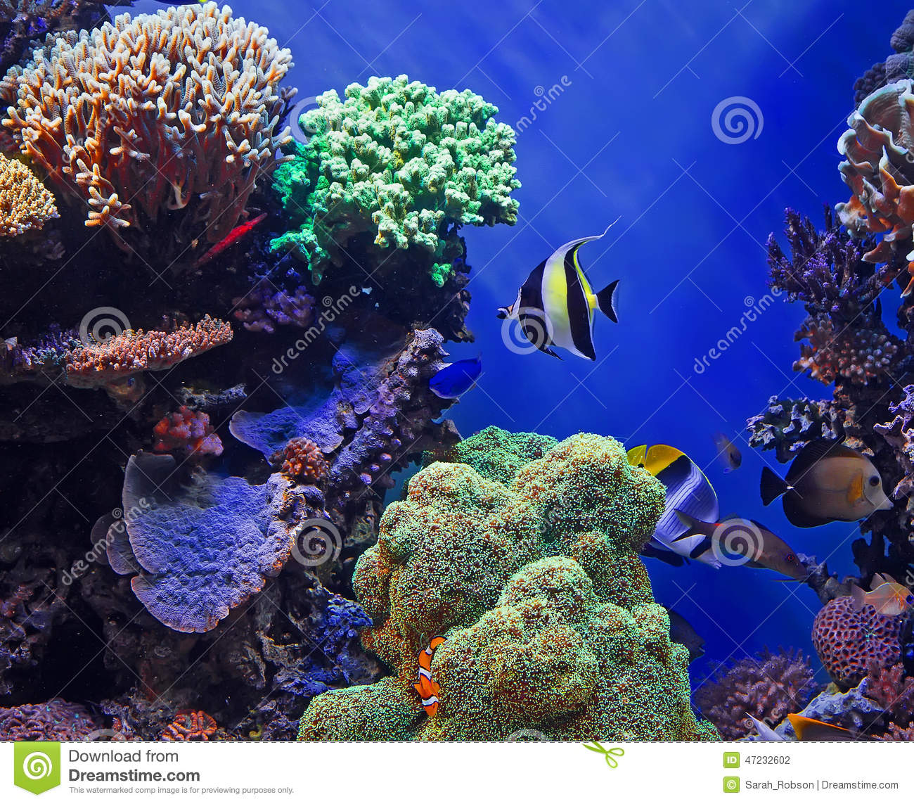Coral Reef Background: Tropical Fish And Coral Reef Stock Photo