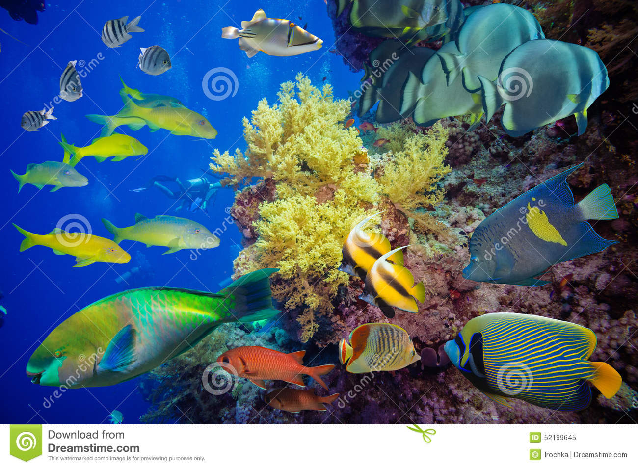 Tropical fish and coral reef stock image image of marine for Reef tropical fish