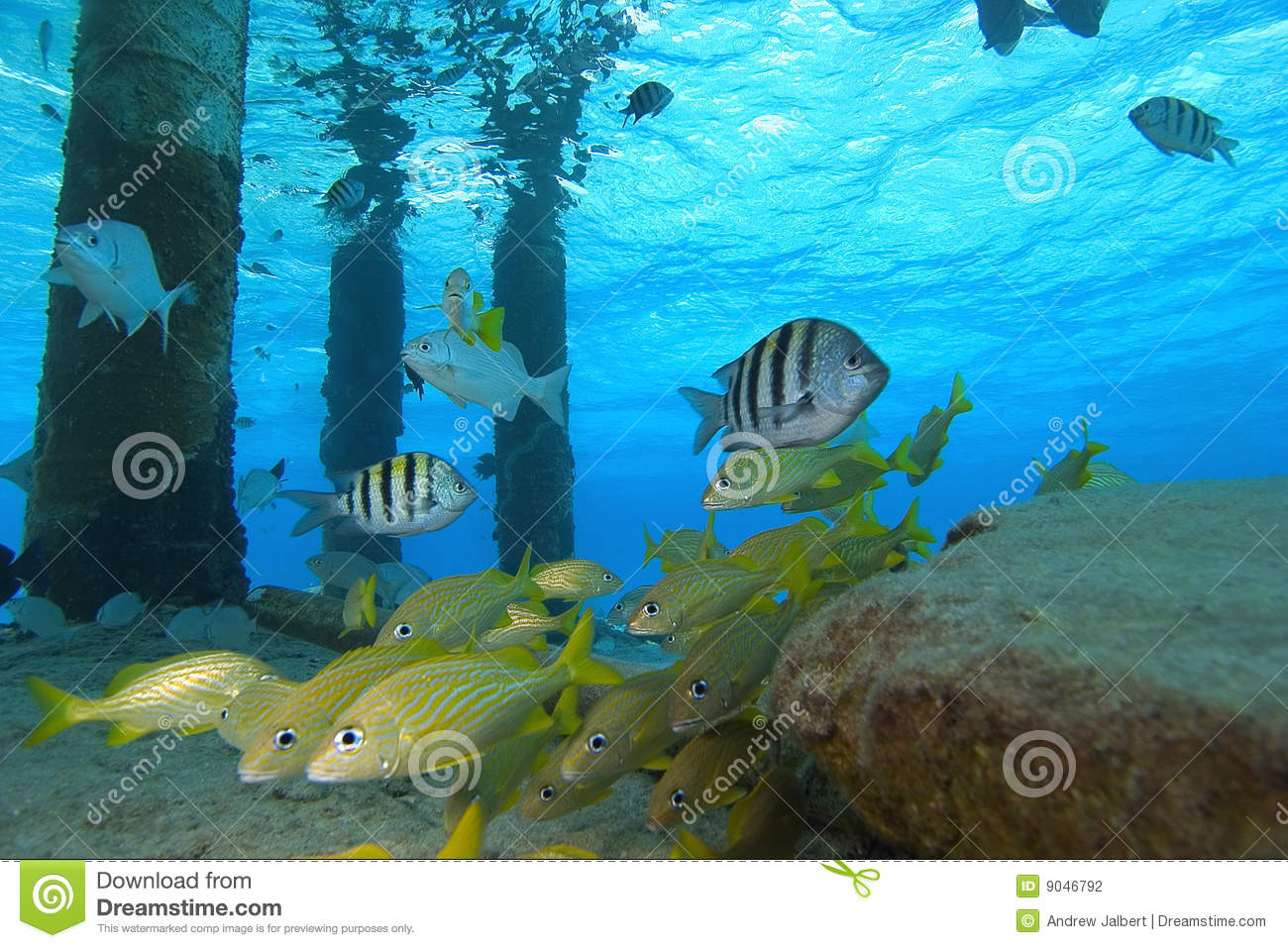 Tropical fish cozumel mexico stock photo image 9046792 for Fish in mexico