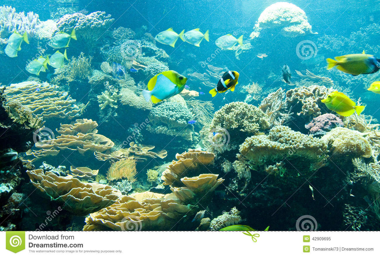tropical fish in its habitat stock image image of live tropical clipart png tropical clip art images