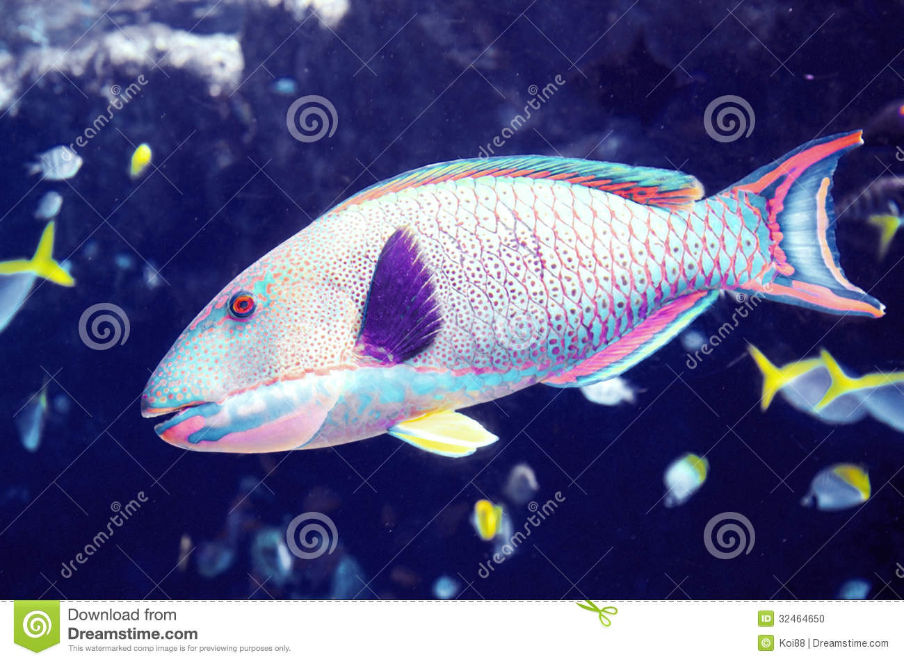 Large tropical fish underwater in a reef.