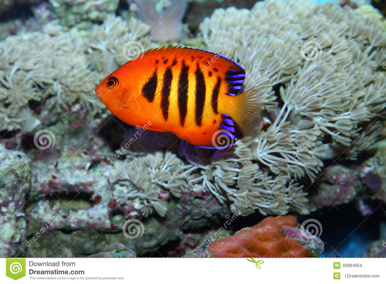 Tropical fish stock photo image 43964954 for Red sea fish