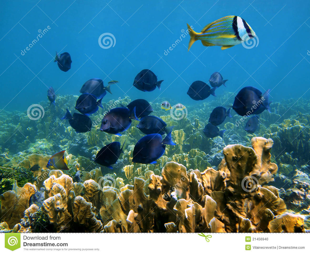 Tropical fish in mexico stock photo image 21456940 for Fish in mexico