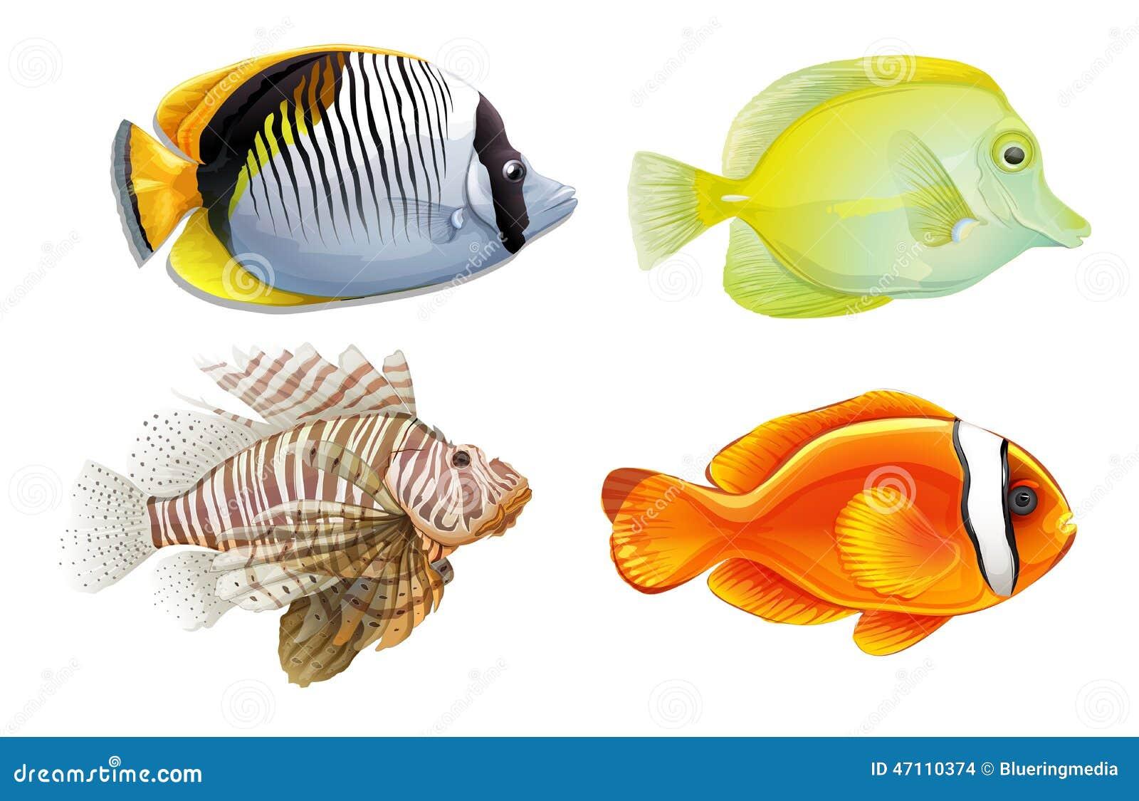 Graphic Lion Fish Pattern Vector Illustration