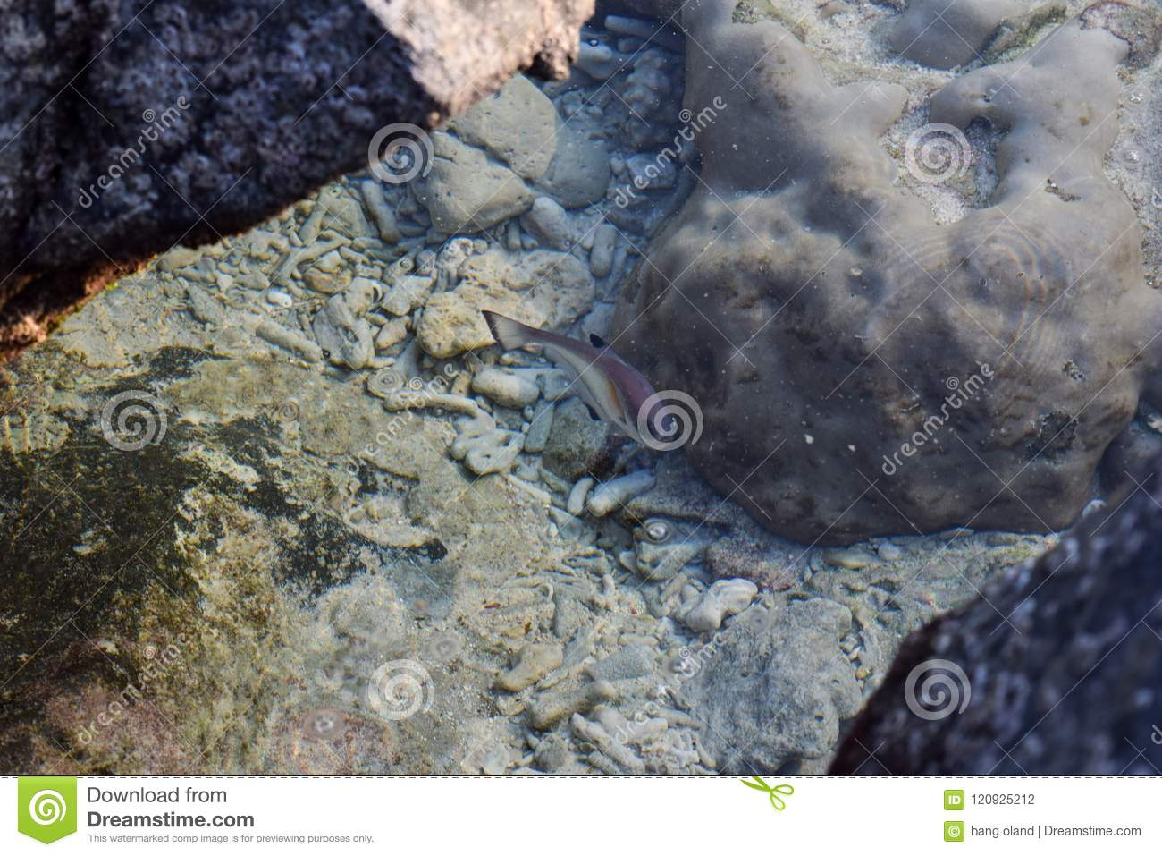Tropical fish on the shore